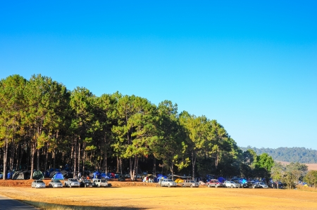 camping in pine forest in evening time  photo