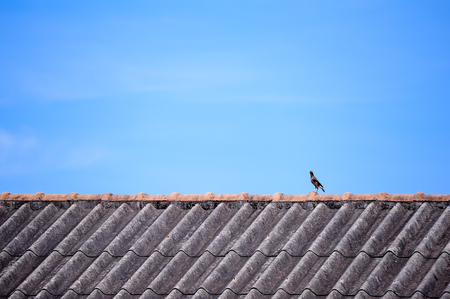mynah bird perching on top of roof