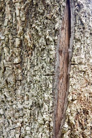 rot: close up of cracked tree bark texture