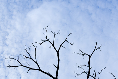 Dead tree branch against cloudy sky background Stock Photo