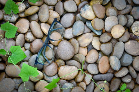 Clear eyeglasses, Glasses transparent dark blue frame Vintage style on pebbles with plant around