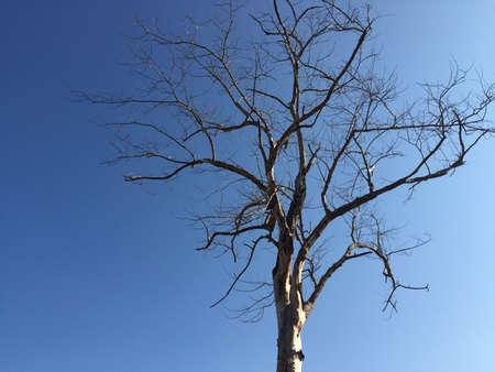 bluesky: Tree blue sky Stock Photo