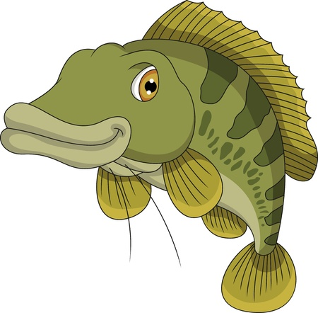 freshwater fish: bass fish cartoon Illustration