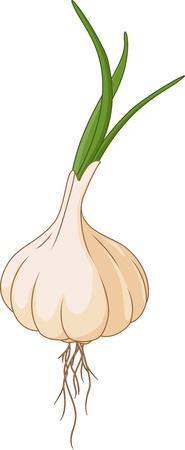 garlic for you design Ilustração