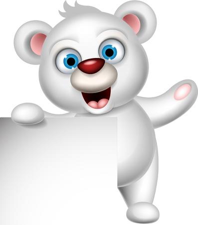 oso blanco: oso polar lindo con la muestra en blanco