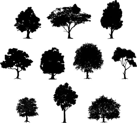 arbol alamo: colecci�n de la silueta del �rbol Vectores