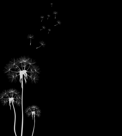 dandelion for you design Vector