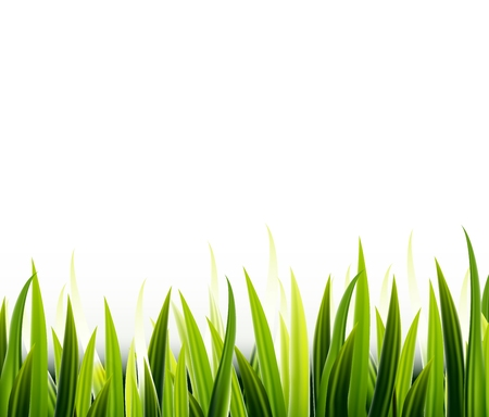 sedge: Green grass for you design Illustration