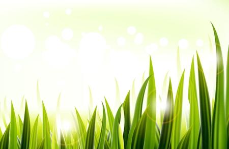 grass blades: Green grass