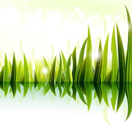 sedge: Green grass vector design Illustration