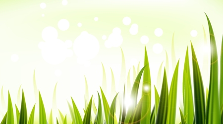 sedge: illustration of Green grass vector design