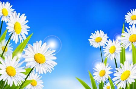 Margarita flores de fondo Foto de archivo - 32791123