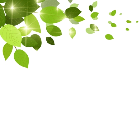 natural green background with leaf fall leaves