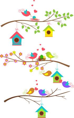 Harmony Families of birds