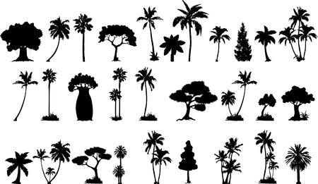 cypress tree: various vector trees silhouettes for you design