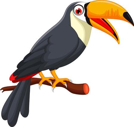 toucan: Cute cartoon toucan bird
