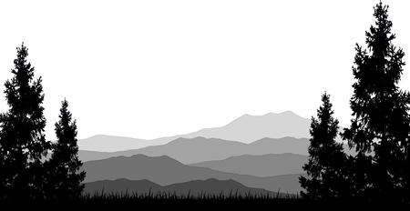 coniferous forest: la naturaleza de fondo con bosque de pinos Vectores