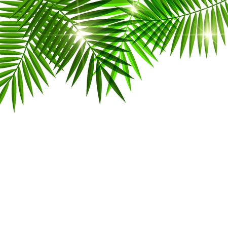 palm branch: palm tree background for you design