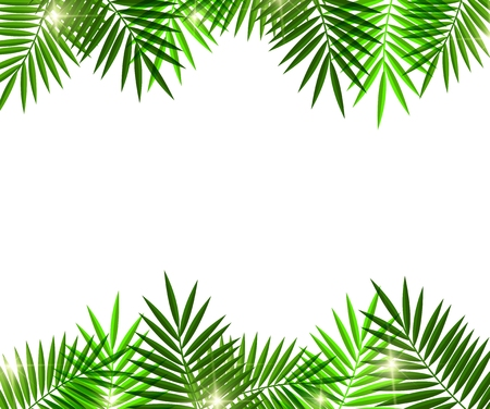 Leaves of palm tree on white background Stock Illustratie