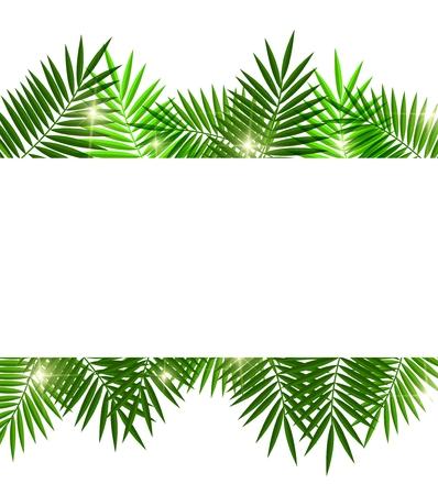 白い背景の上にヤシの木の葉