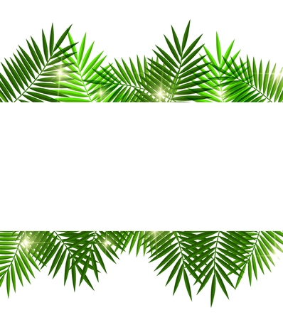 palm oil: Leaves of palm tree on white background Illustration