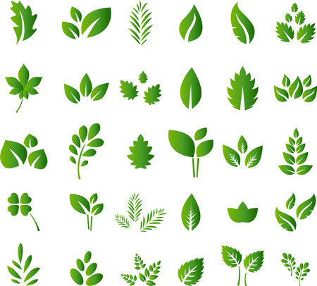 Set of green leaves design elements for you design