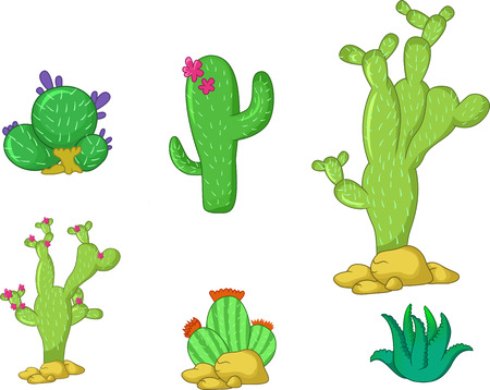 types of cactus: Different types of cactus plants realistic decorative icons set for you design
