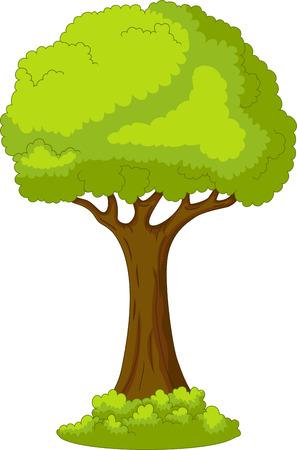arboles frondosos: árbol con fondo de la vida