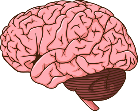 membrane: human brain cartoon