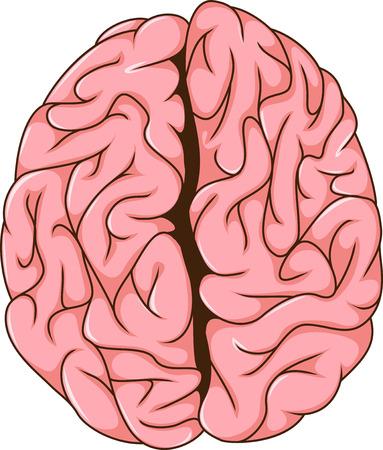 mentality: human left and right brain cartoon