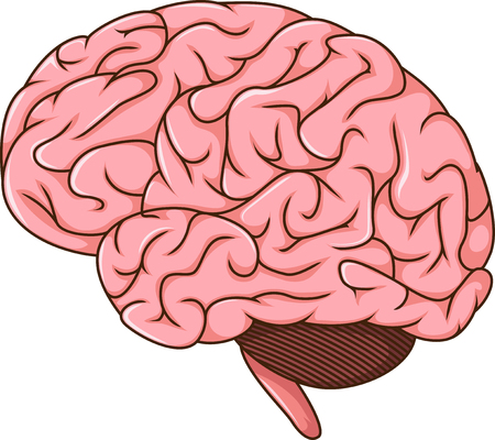 parietal: human brain cartoon