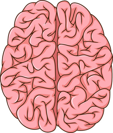 cns: human left and right brain cartoon