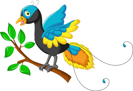bird of paradise: paradise bird cartoon