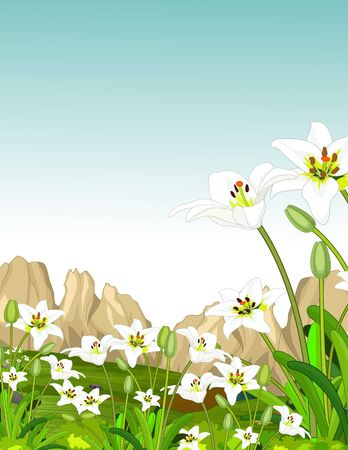 White Ivy Flower In Grass Field With Rocks Hill Cartoon