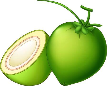 Vector Green Coconut Cartoon Illustration Isolated