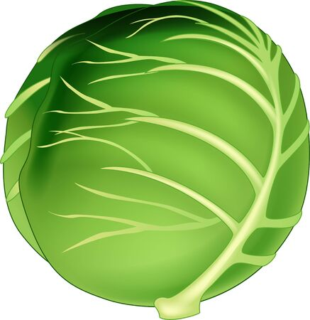 Green Cabbage Vegetable Icon Logo Cartoon Vector Illustration Isolated Ilustracja