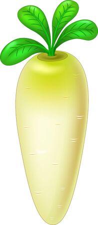 Fresh White Radish Vegetable Cartoon Vector Illustration Isolated