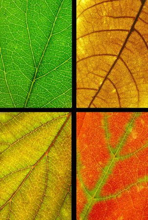 full resolution close up of four color leaf texture with selecting path included. photo