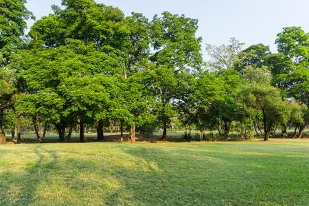 Beautiful Public green park in Autumn