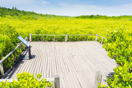 Tung Prong Thong Golden Mangrove Field, natural areas in Rayong of Thailand. Stock Photo