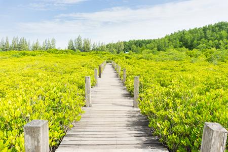 Tung Prong Thong Golden Mangrove Field, natural areas in Rayong of Thailand. Фото со стока