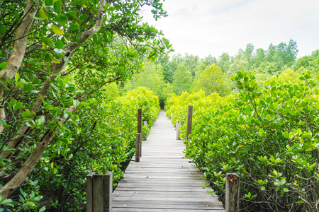 The mangrove forest in Rayong of Thailand, Tung Prong Thong.