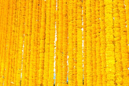 beautiful rows of yellow marigold flower background. Zdjęcie Seryjne