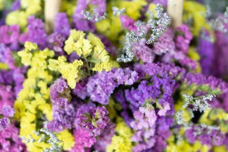 Beautiful purple and yellow flowers background, verbena flowers background.