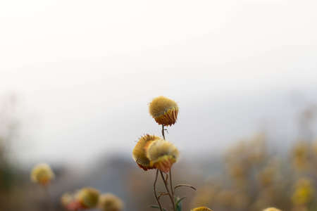 Beautiful little flowers background, vintage plants, nature Yellow and orange grass flowers.