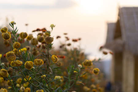 Nature grass flowers in sunset.little flowers background.