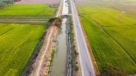Aerial view of paddy rice field and problems drought in Thailand.