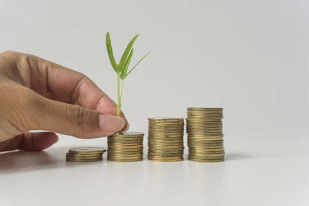 Hand putting coin with green plant, business, financial, banking saving concept.