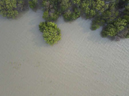 Top view of Mangrove forest with green mangrove trees, there is a place to put text below the picture.