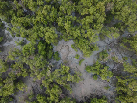 Top view of Mangrove forest with green mangrove trees in Thailand.